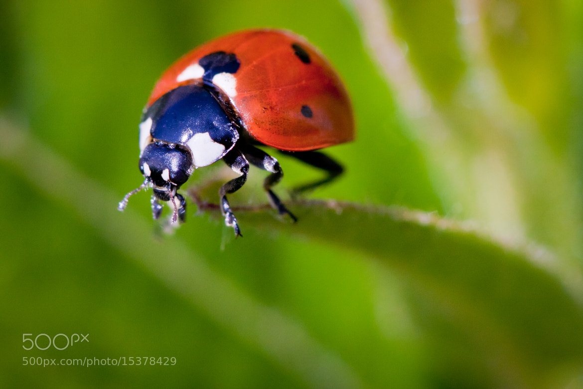 Photograph Ladybug on a diving board by Jérôme Le Dorze on 500px