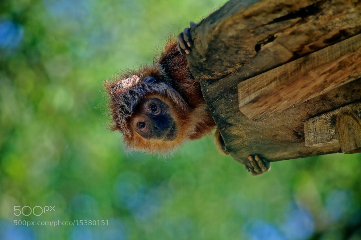 Photograph Peekaboo, I See You !!! by Ricardo  Alves on 500px