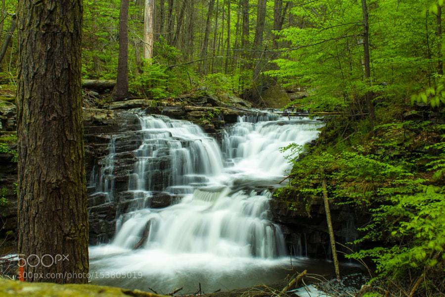 Jarrett Falls