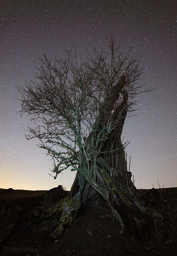 Photograph Ent at Night by Steve Mackay on 500px