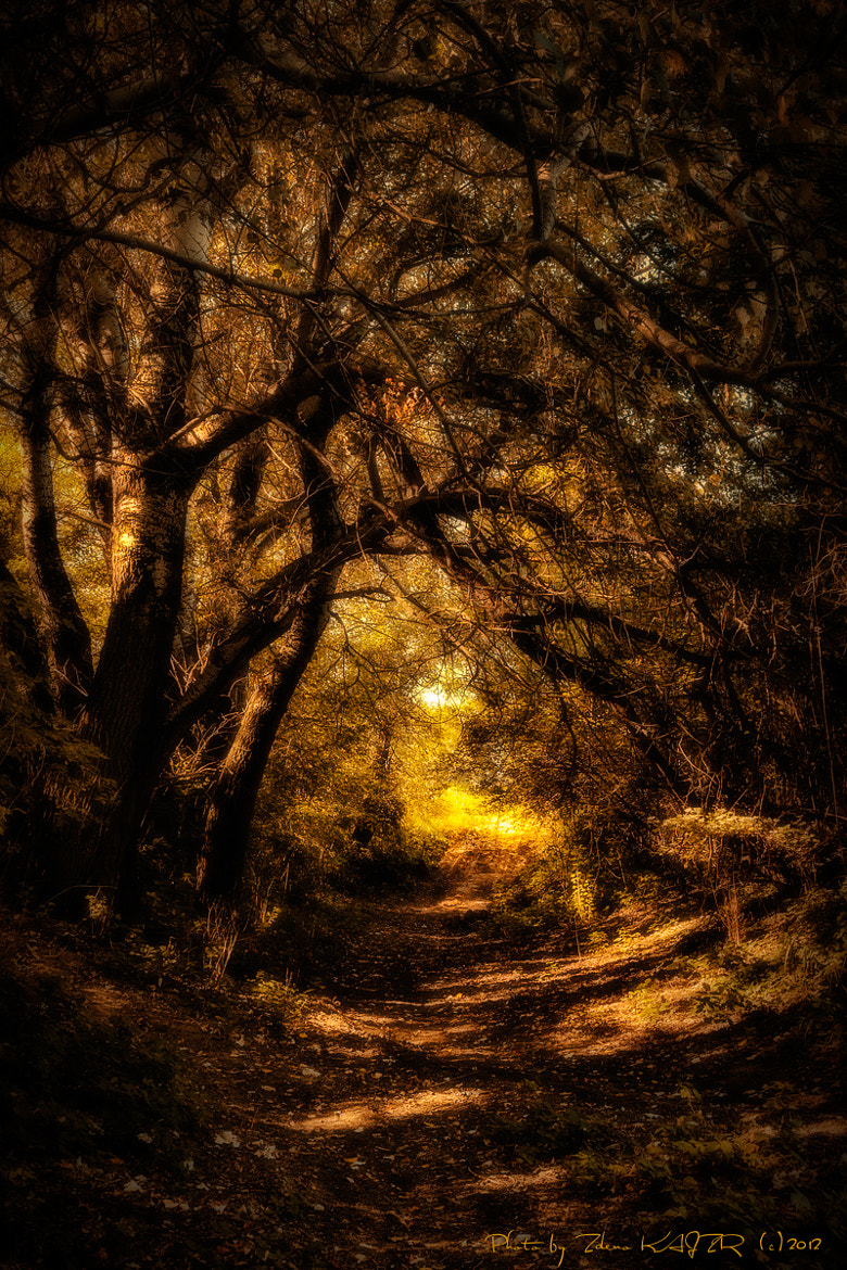 Photograph Gothic Gold Forest by Zdeno Kajzr on 500px