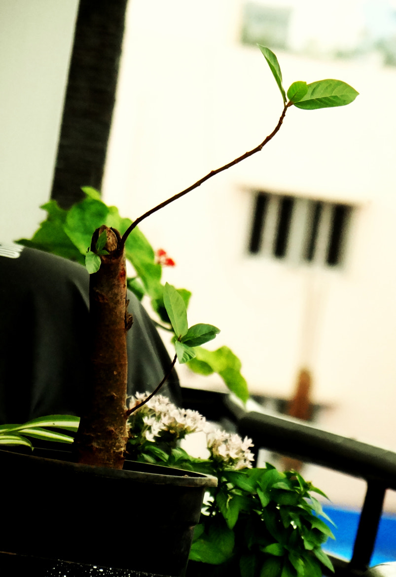 Photograph i have juss started by nitish bharadwaj on 500px