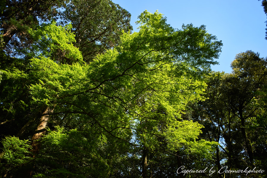 500px.comのDeemarkさんによるGreen sky