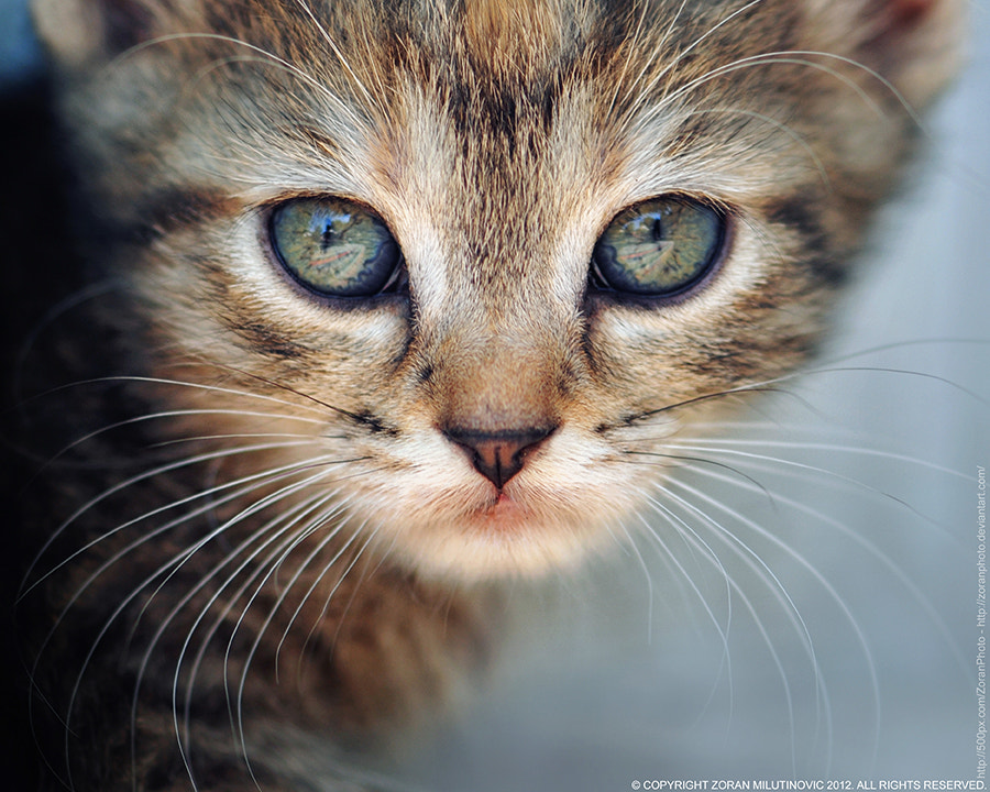 Photograph Reflection in the eyes by Zoran Milutinovic on 500px