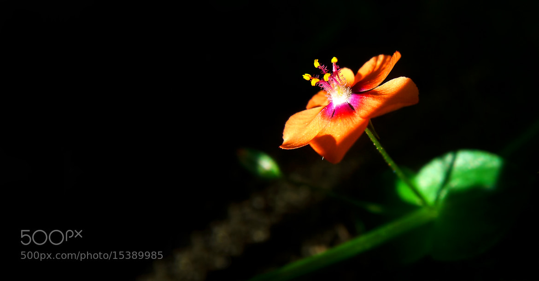 Photograph Macro - tiny shy flower by Jong Shin Lee on 500px