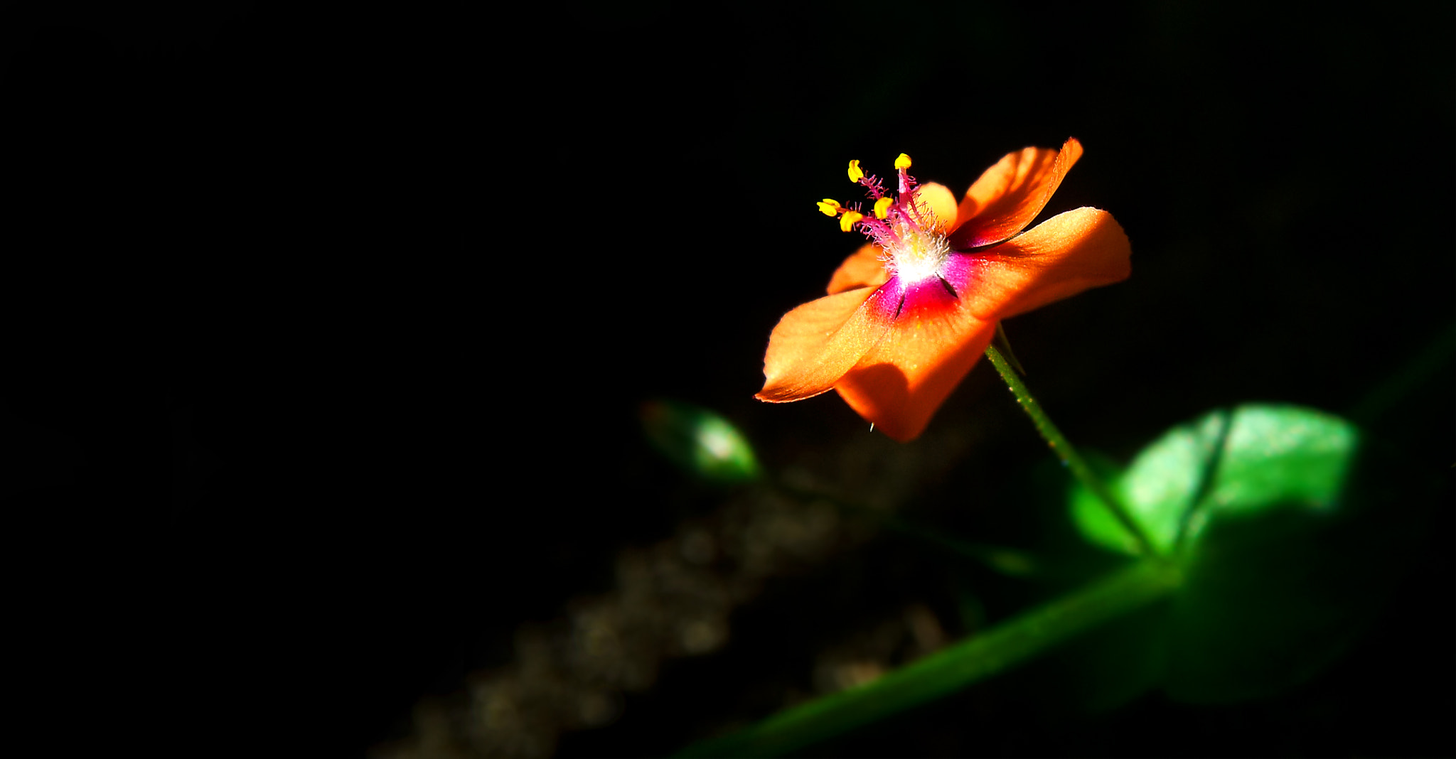 Photograph Macro - tiny shy flower by Jong Shin Lee on 500px
