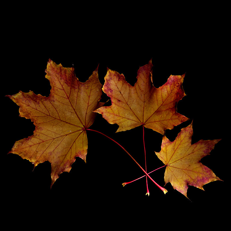 Photograph THE FALLEN LEAVES... by Magda Indigo on 500px