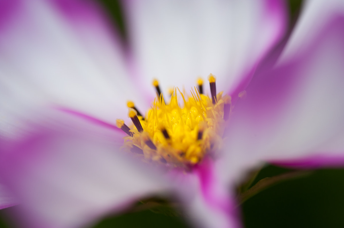 Photograph cosmos.. by Kyeong-sang Yun on 500px