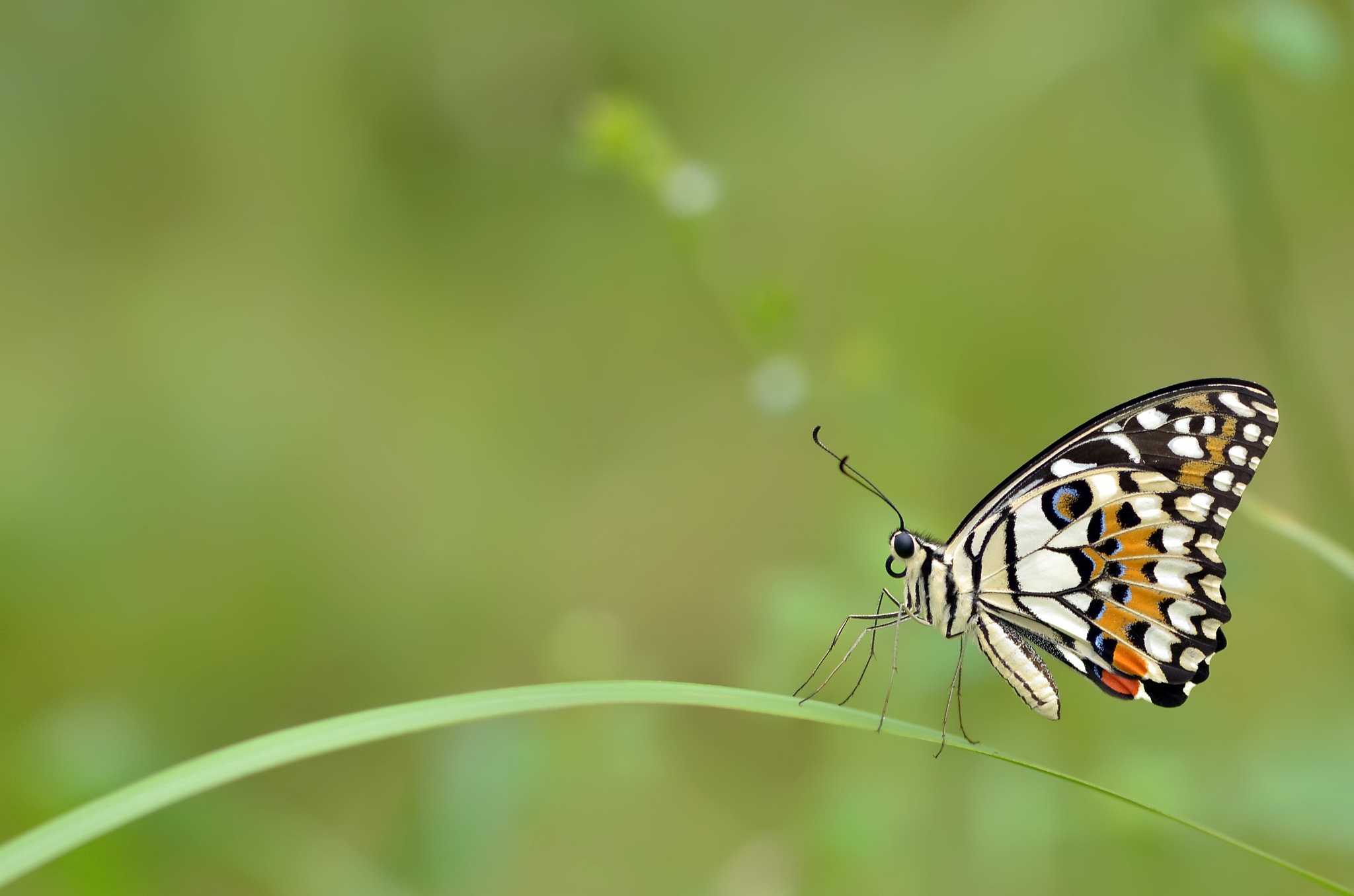 Photograph The Butterfly by Dewo Sri Sumarsono on 500px