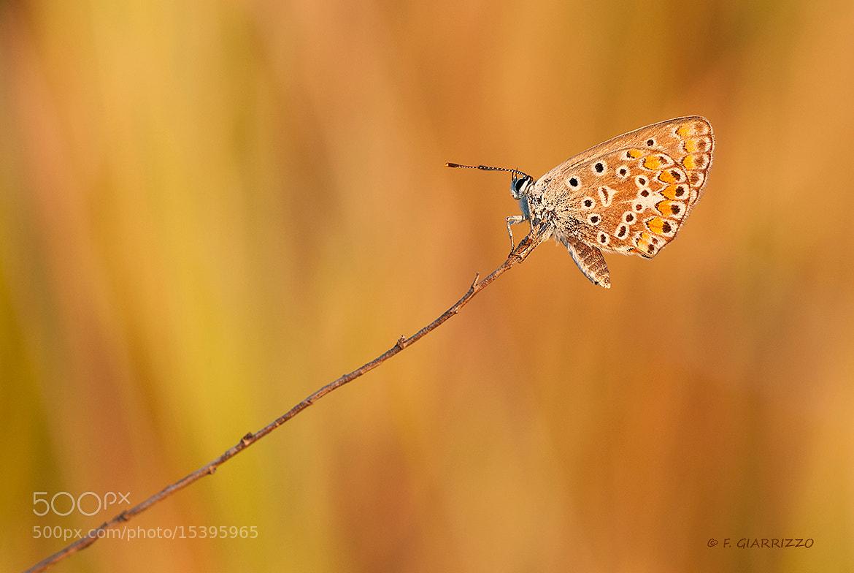 Photograph Orange light by Fabio Giarrizzo on 500px