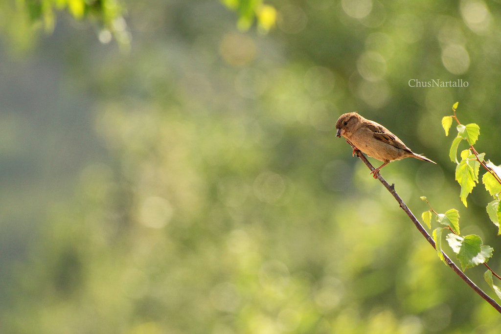 Photograph Green and birds by Chus Nartallo on 500px