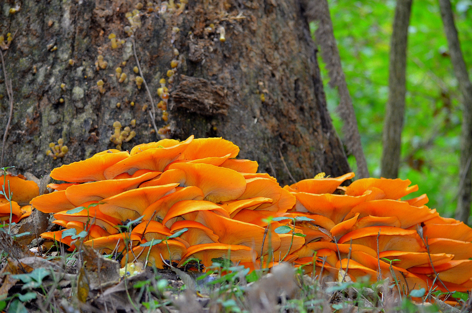 Photograph halloween shrooms? by Angie Peters Reszinski on 500px