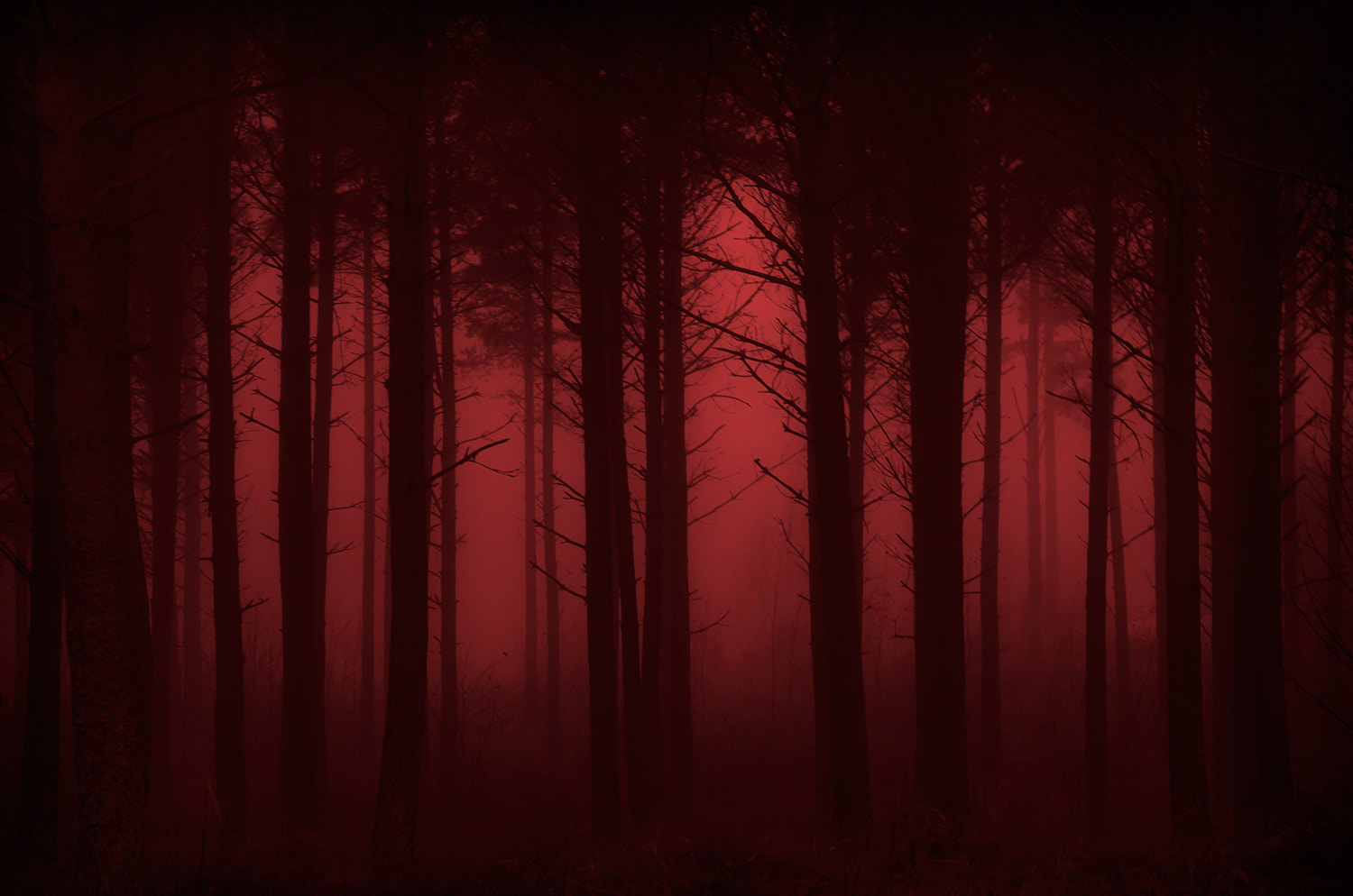 Photograph We'll find the way in red by Ulf Bjolin on 500px