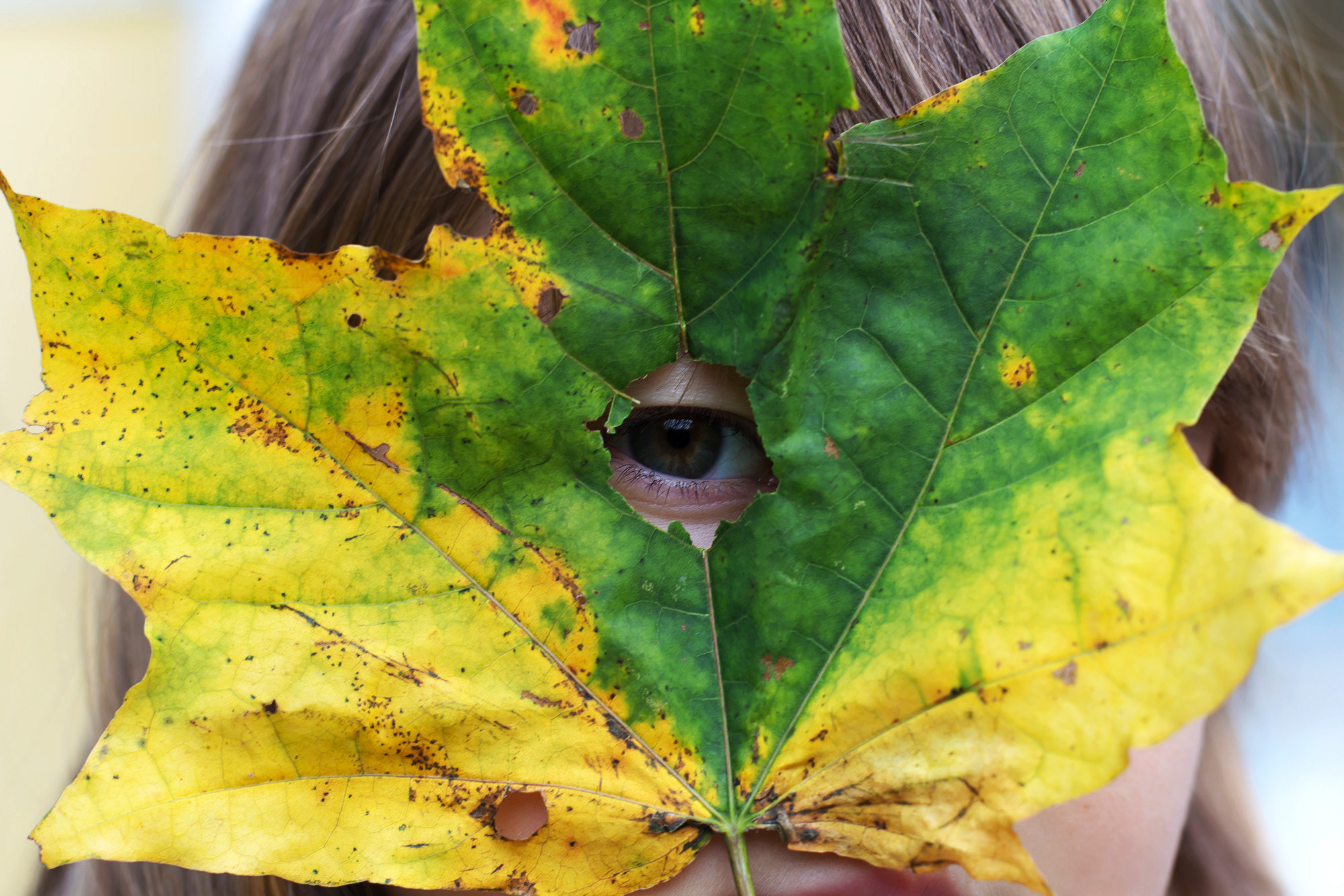 Photograph Eye of autumn by Sergey Bronevoy on 500px