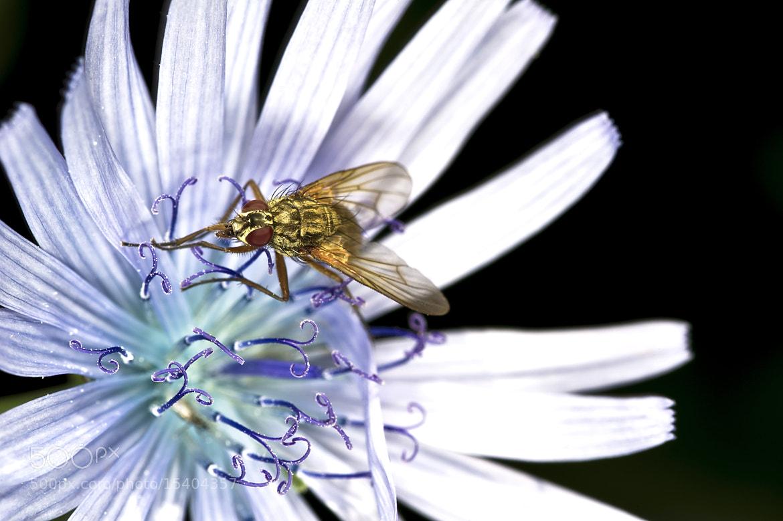 Photograph La mosca. by Juan Ballesteros López on 500px