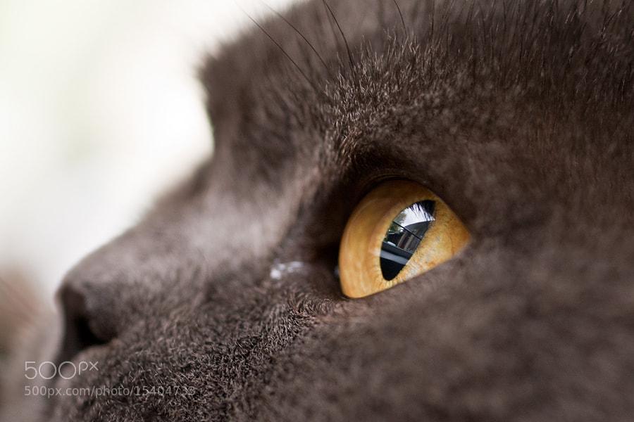 Photograph through her eyes.. by Soňa Kovalčíková on 500px