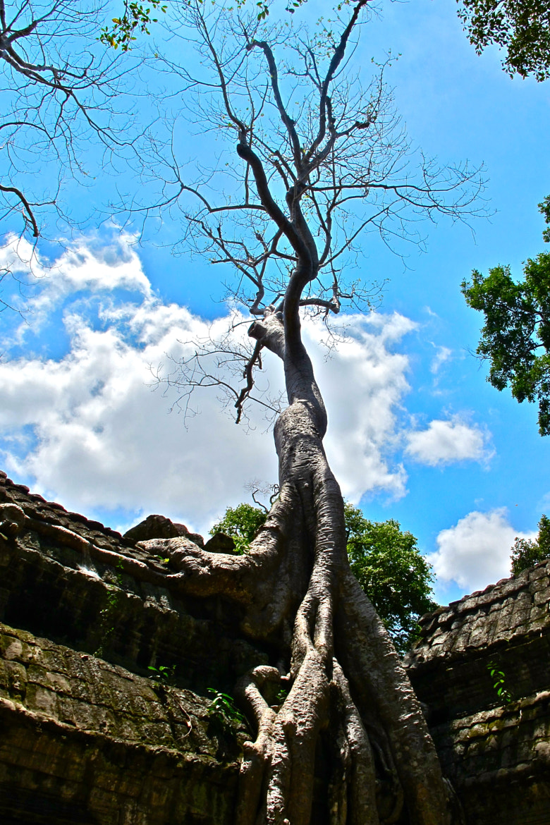 Photograph Great Tree  by Eugenie Stone on 500px