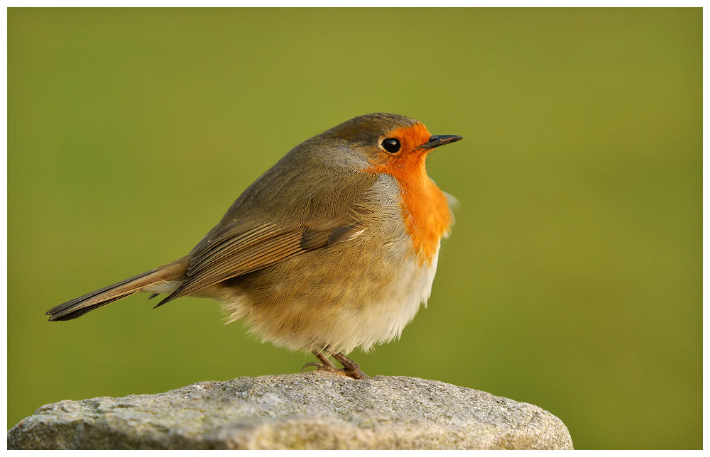 Photograph Robin by Geoffrey Baker on 500px