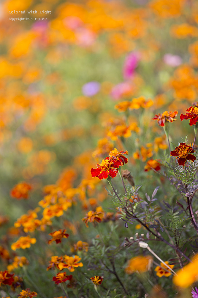 Photograph flowers by bitsro Ryu on 500px