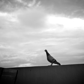 with my new Leica M9, totally in love