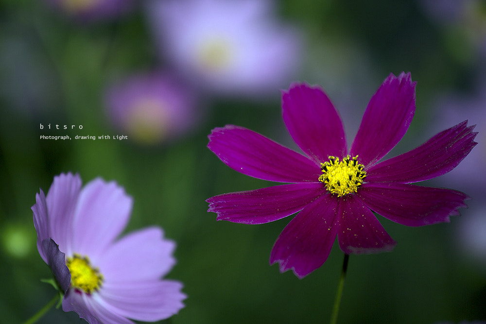 Photograph cosmos by bitsro Ryu on 500px