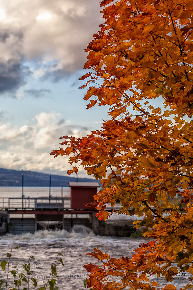 Photograph Autumn leaves by Anders Johansson on 500px