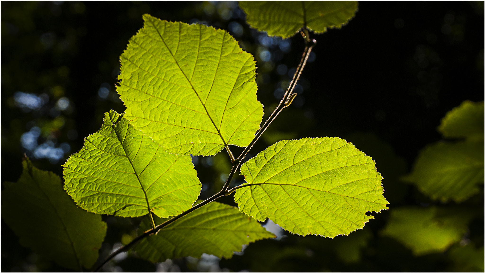 Photograph Sunlit Leaves by Mark Shoesmith on 500px