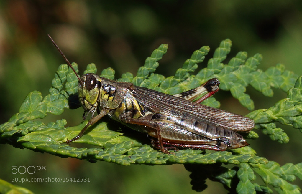 Photograph fall hopper by H Singh on 500px