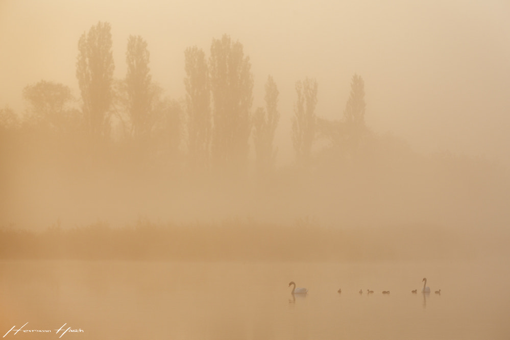 Photograph Morning at a lake by Hermann Hirsch on 500px