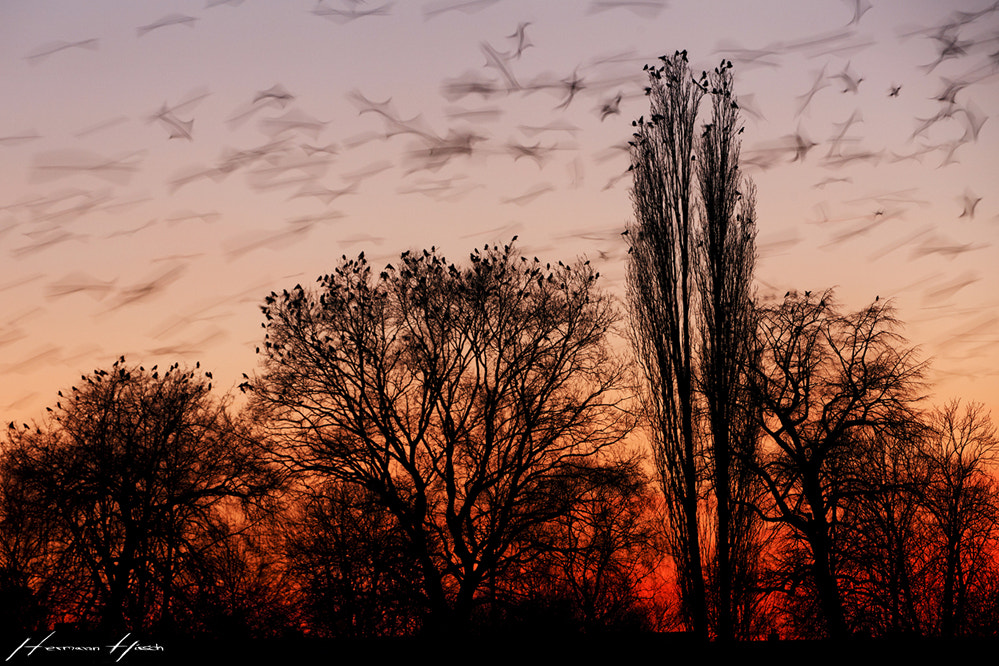 Photograph Going to sleep by Hermann Hirsch on 500px