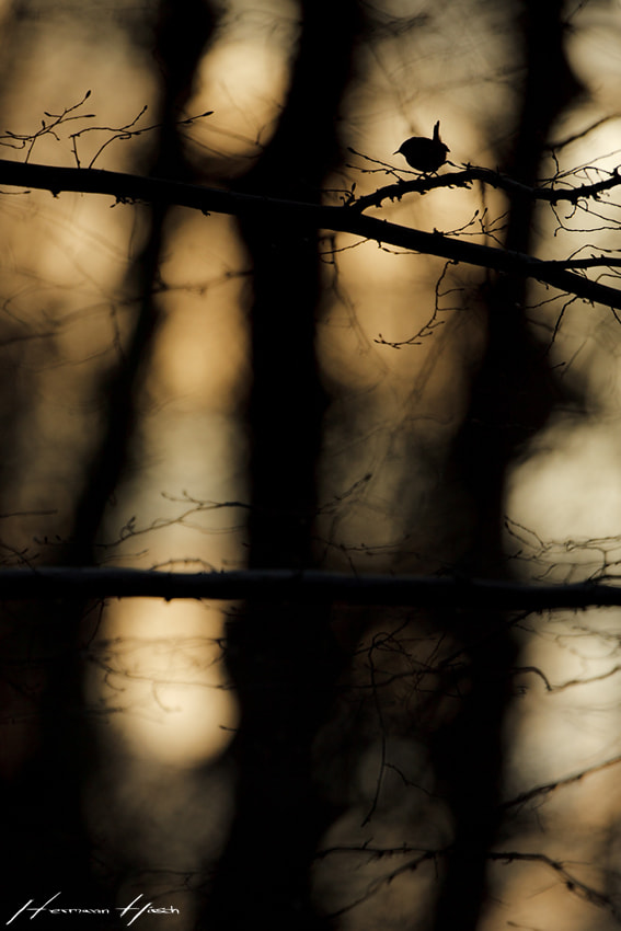 Photograph Life behind bars by Hermann Hirsch on 500px