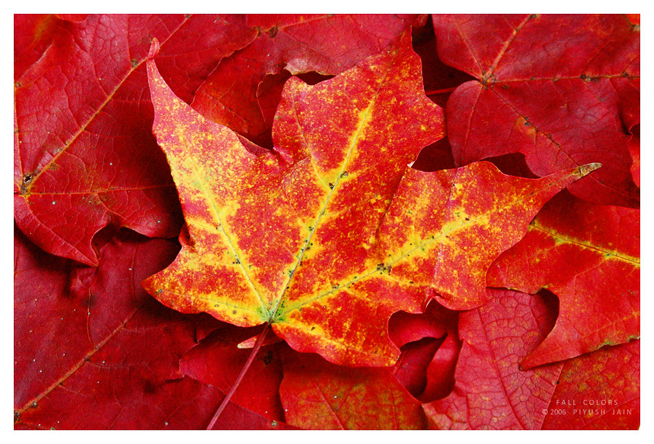 Photograph Fall Colors by Piyush Jain on 500px
