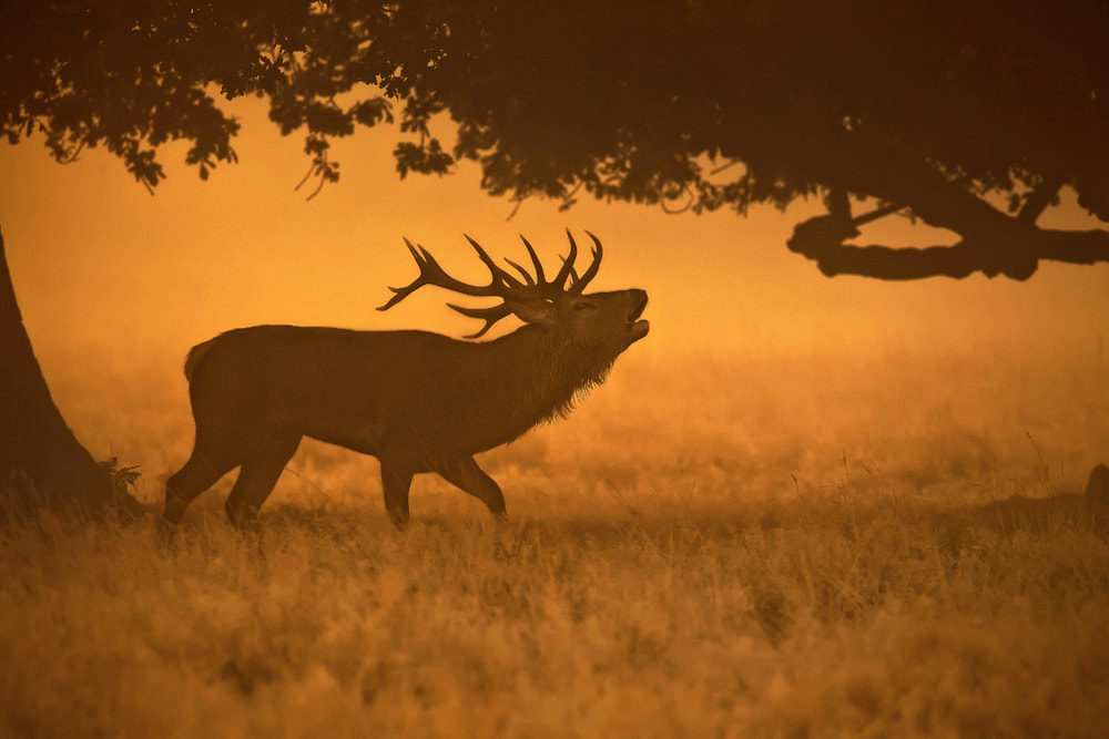 Photograph King of the mist by Phil  Morgan on 500px