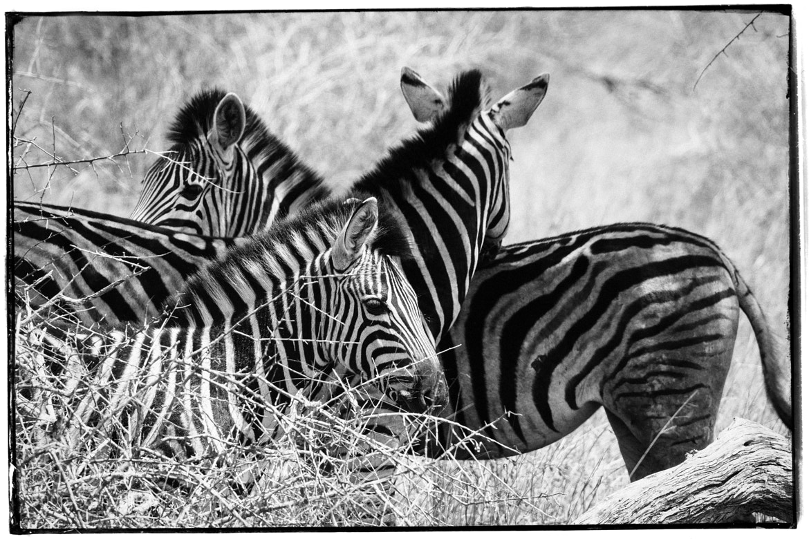 Photograph The White Stripes by Olli H. on 500px