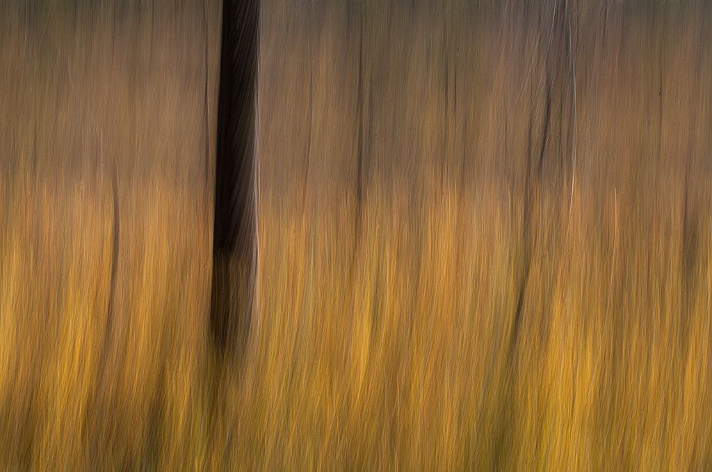 Photograph In the forest by Allan Wallberg on 500px