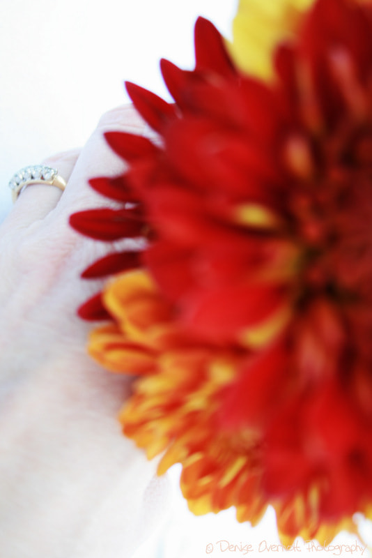 Photograph Wedding Day by denise overholt on 500px