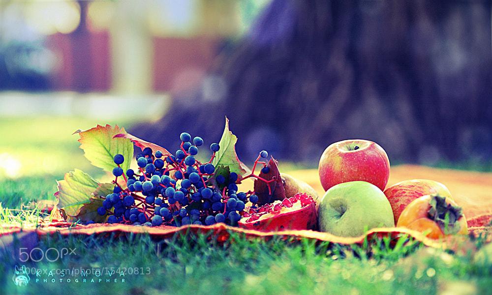 Photograph Осенний натюрморт by Anastasia Kasimova on 500px