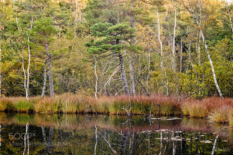 Photograph Herbstfarben by Alexander Derenbach on 500px