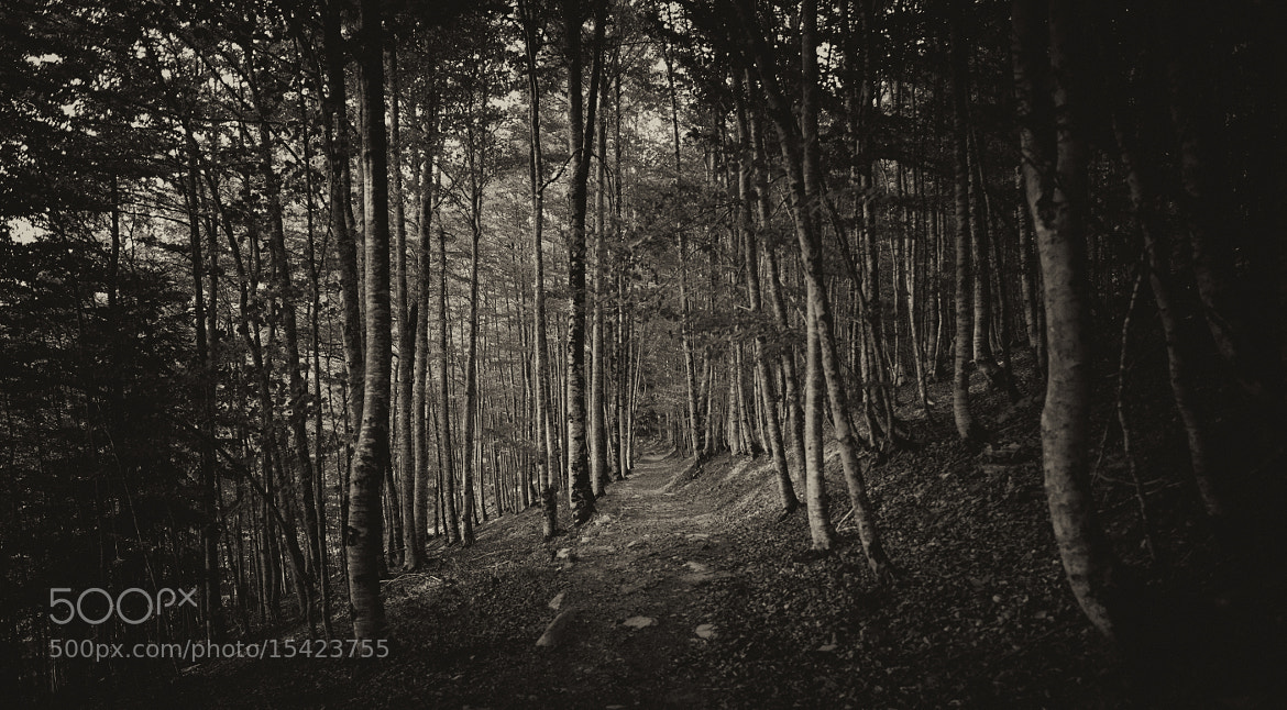 Photograph Deep in the forest by David Fernandez on 500px