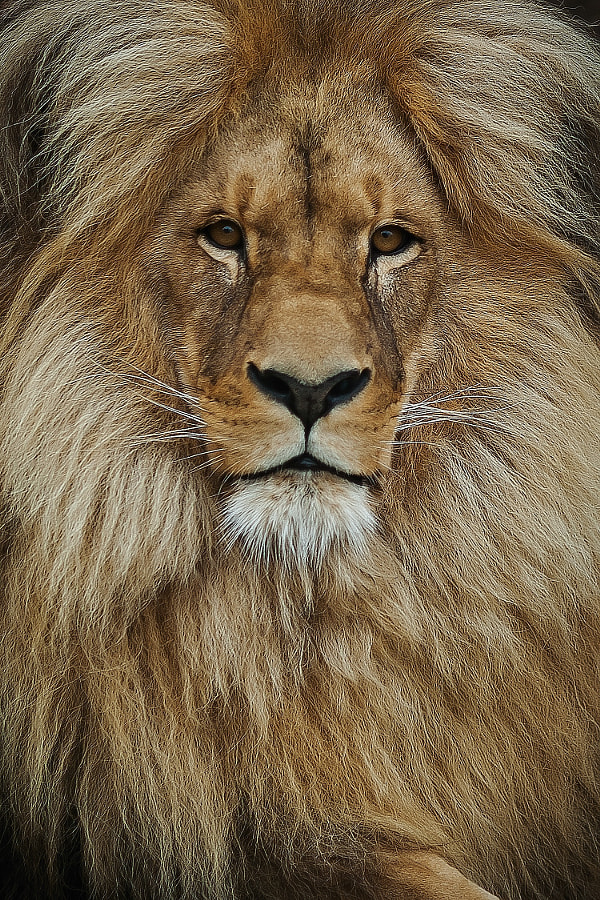Lion by Tomas Piller on 500px.com