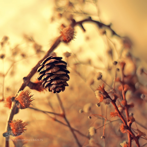 Photograph Life as it Is  by Sortvind  on 500px
