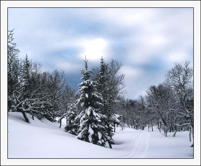 Photograph A Winter morning. by Kent Lennart Vassdal on 500px