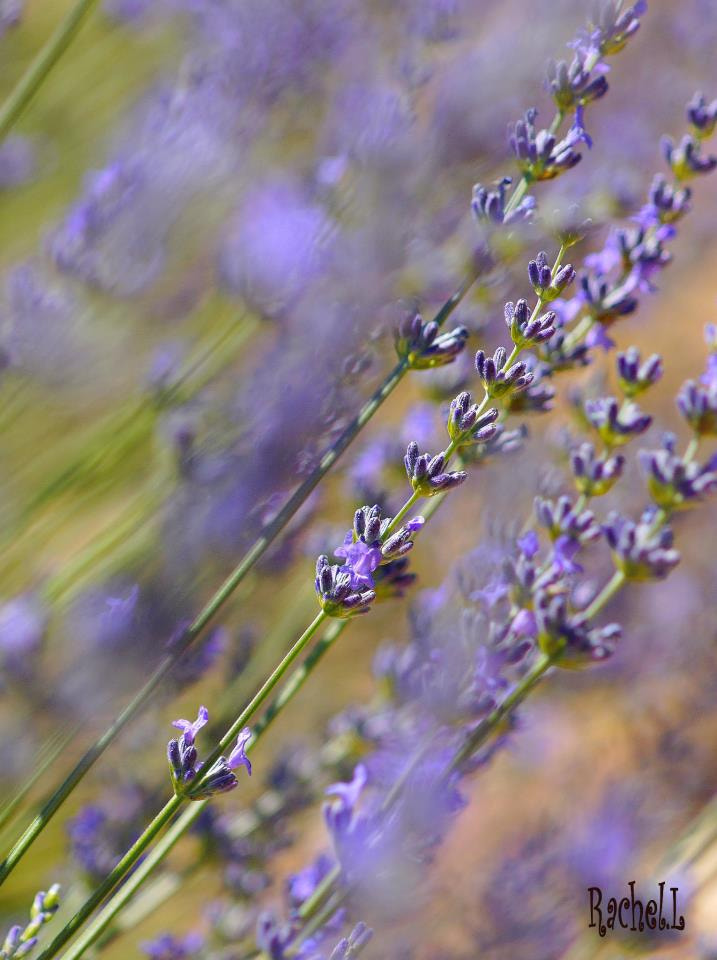 Photograph Flavor of Provence by Rachel Laffay on 500px