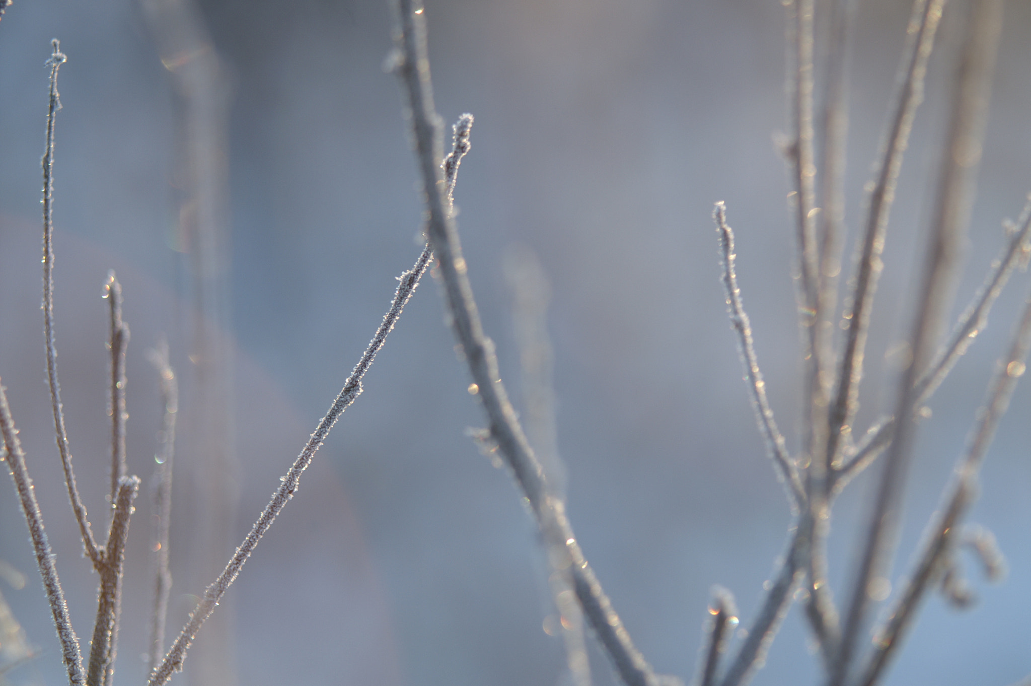 Photograph Winter Freeze by Charlene Fortner on 500px