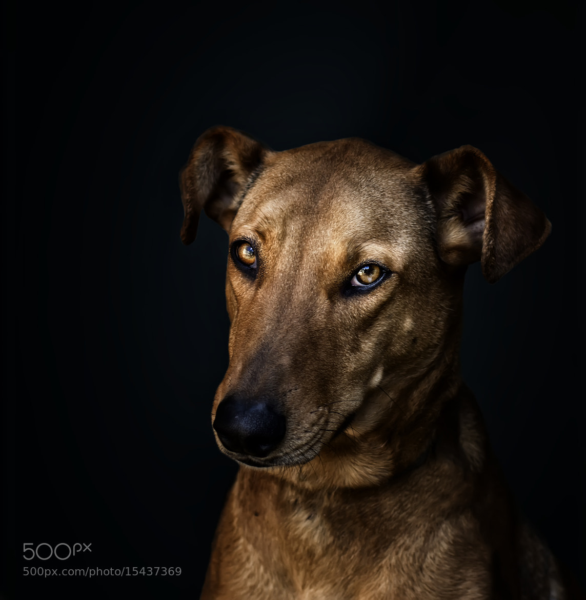 Photograph Sasha by Carlos Bermúdez on 500px