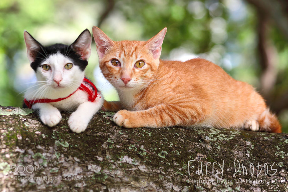 Photograph Ebi and Sunkist by Nick Lee on 500px