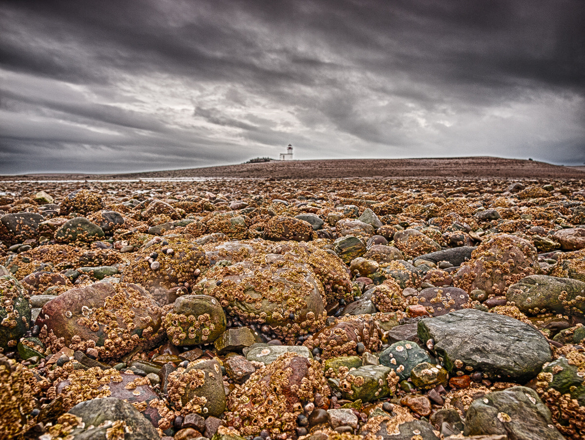 Photograph Holy Barnacles Batman ! by chris white on 500px