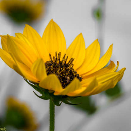 Sunshine, Canon EOS 700D, EF-S18-135mm f/3.5-5.6 IS STM