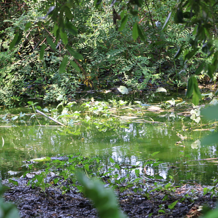 Pond, Canon EOS 70D, EF-S18-135mm f/3.5-5.6 IS STM