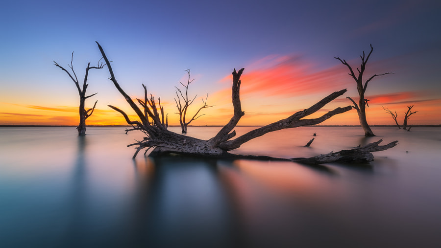 Bonney Brushed by Dylan Toh & Marianne Lim on 500px.com